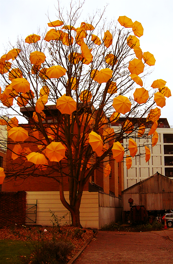 #Bloom by #Sam Spenser - #Umbrella Tree